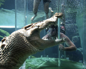 swim-with-crocodiles-in-the-cage-of-death-for-2-darwin_large